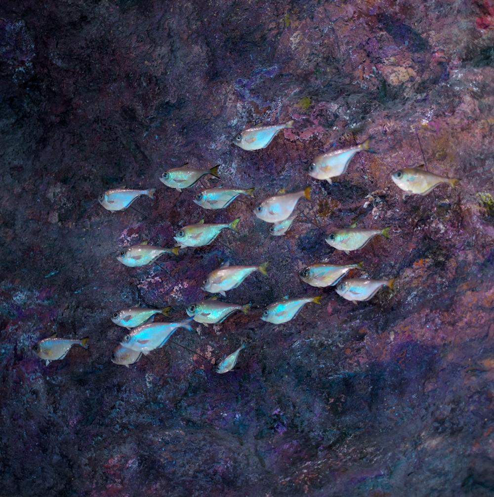 TDTDC 73 (School of Fish)