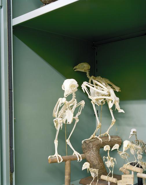 , 'Vogelskelette,' 2008, FELD+HAUS