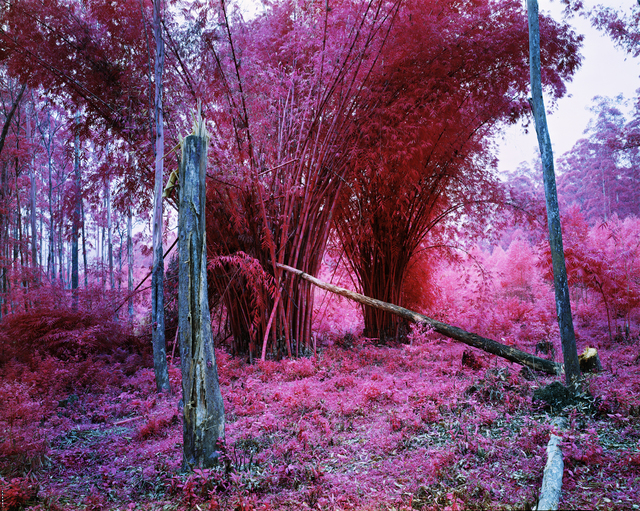 Richard Mosse, 'To be titled', 2015, Jack Shainman Gallery