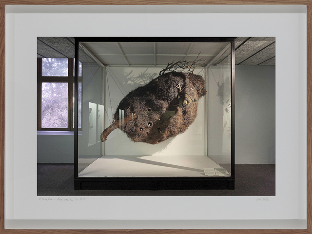 , 'Sociable Weaver's Nest, South African Museum, Cape Town,' 2009, Barnard