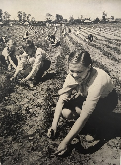 , 'Agriculture in the War Years, Schoolgirls Help Collective Farms,' 1941, Atlas Gallery