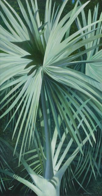 , 'Bismarckia Nobilis, Antigua,' 2015, Gallery NAGA