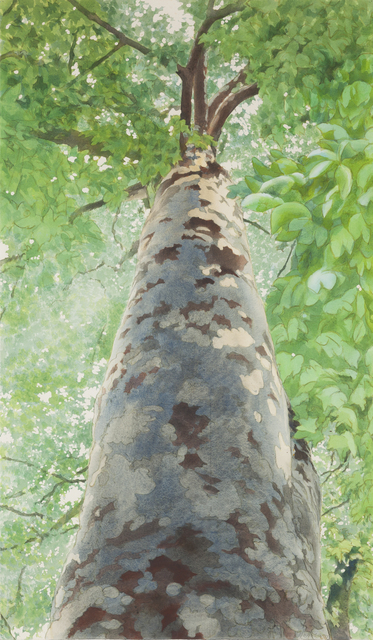 , 'Tree II,' 1989, Childs Gallery
