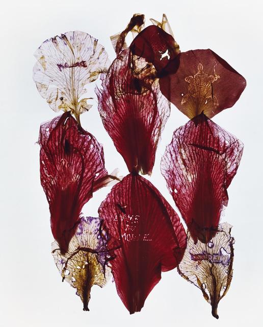 , 'Archives,' 2013, Galleria Fumagalli