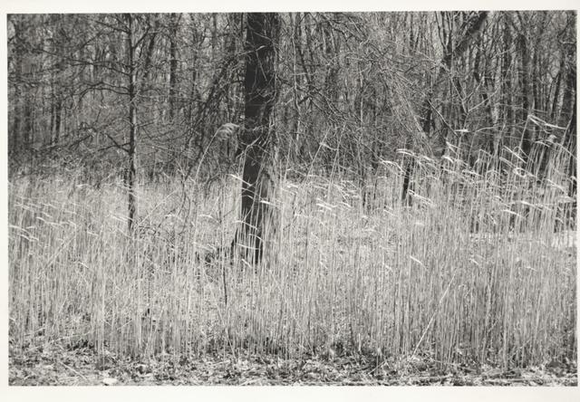 Glenn Goldstein, 'Wheat Detail', 2016, Fountain House Gallery