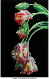Tulips, from the series Botanica Magnifica