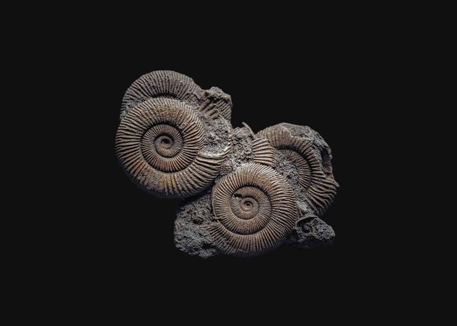 andrey akimov, 'Fossil#4', 2019, Galería silvestre