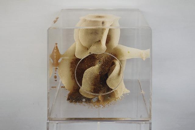 Ren Ri, 'Yuansu Series II#6-27', 2014-2015, Sculpture, Acrylic box, natural beeswax, Pearl Lam Galleries