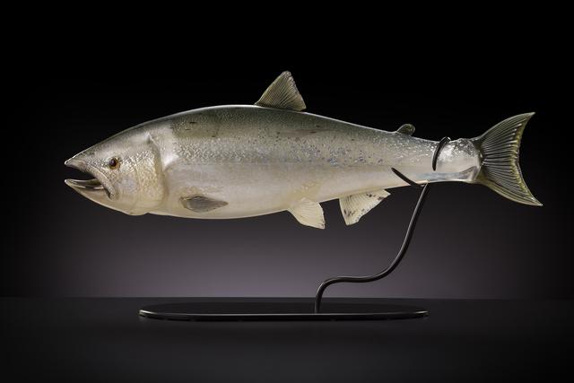 , 'Tyee (Salmon),' 2014, Stonington Gallery