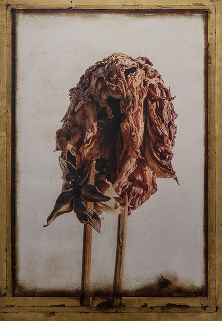 , 'Dahlia Icon 6243,' 2017, William Campbell Contemporary Art, Inc.