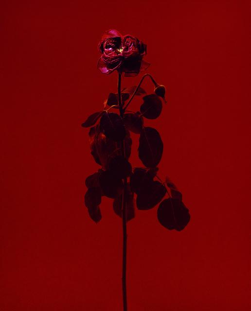 , 'fig. VIII,' 2017, Galerie SOON