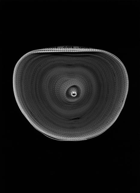 Susana Reisman, 'Measuring Tape 13', 2005, Circuit Gallery