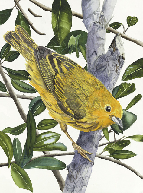 , 'Yellow Warbler,' 2018, Wally Workman Gallery