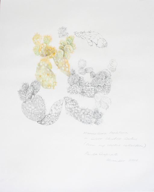 , 'The garden of unreason - The cactus drawing,' 2018, Gallery Espace