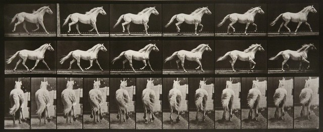 , 'Animal Locomotion: Plate 596 (Horse Cantering),' 1887, Huxley-Parlour