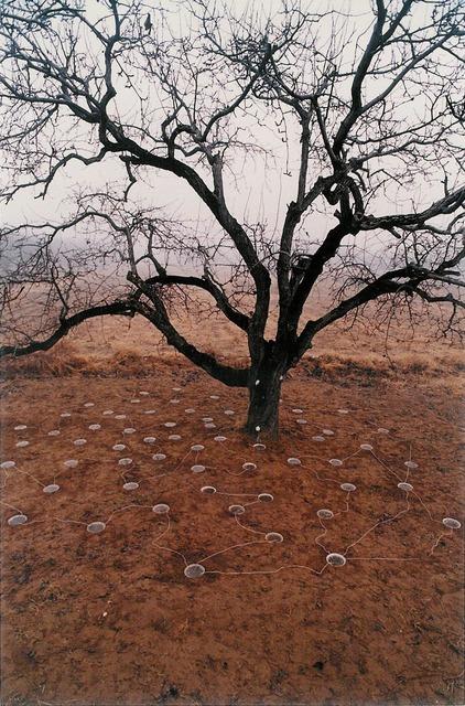 Yin Xiuzhen 尹秀珍, 'Pear Tree', 1994, Chambers Fine Art