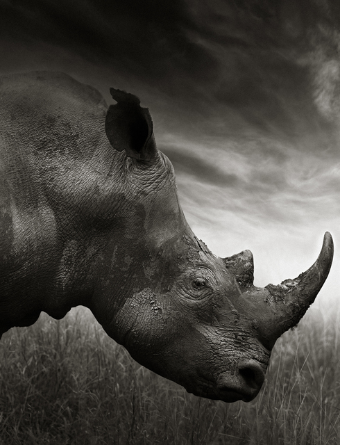 Anton Lyalin, 'Portrait of Africa #21', 2010, Sohn Fine Art