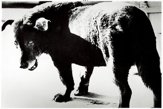 , 'Daido Moriyama,  Misawa,' 1971, Hammer Museum