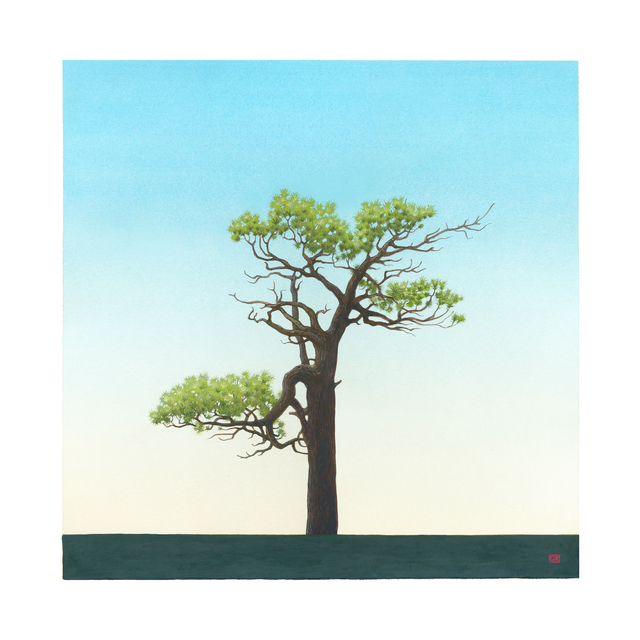 , 'Tree (34˚21.901'N 117˚48.261'W),' 2013, Dedee Shattuck Gallery