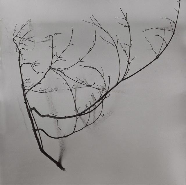 , 'Whispers of Trees-Tea,' 2011-2017, Alisan Fine Arts