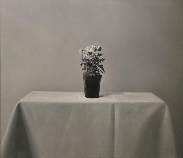 , 'Maceta con flores blancas I ,' 2016, Praxis