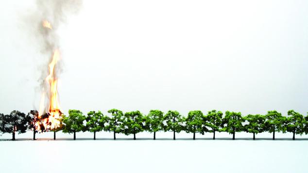 , 'Tree/Line,' 2014, Vera Cortês