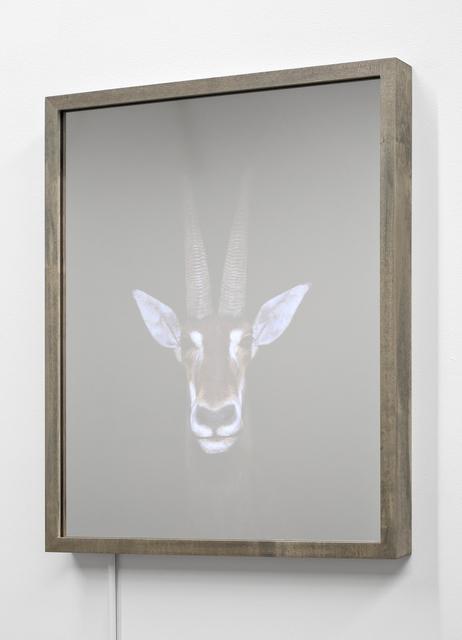 , 'Sable Antelope (Hippotragus Niger),' 2016, EUQINOMprojects