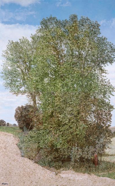 , 'Montana Detour Tree,' 2014, Moskowitz Bayse