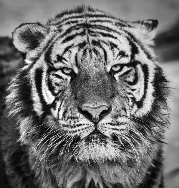 David Yarrow, 'Harbin ', 2016, Maddox Gallery