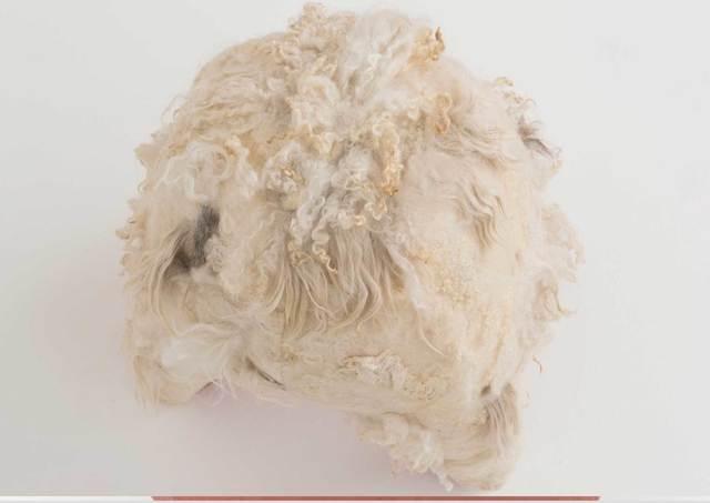 Tanya Aguiñiga, 'Swaddle Stool (Underbelly)', 2015, Volume Gallery