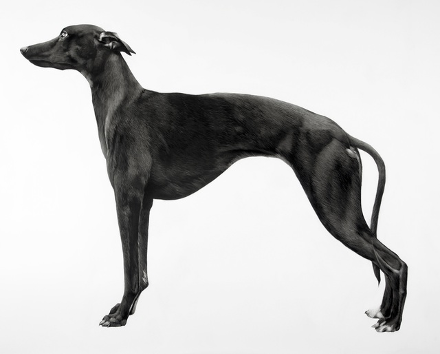 , 'Whippet II,' 2016, Purdy Hicks Gallery