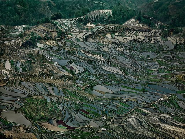 , 'Rice Terraces #5,Western Yunnan Province, China,' 2012, Sundaram Tagore Gallery