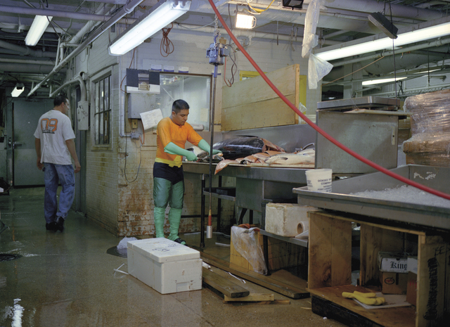 Dulce Pinzon, 'JUVENTINO ROSAS from the State of Mexico works in a fish market in New York. He sends 400 dollars a week.', Alida Anderson Art Projects