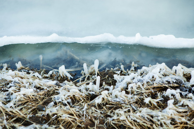 , 'Frozen Grasses,' 2013, 555 Gallery