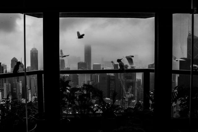 , 'Wild Birds from Employer's...,' , Hong Kong Arts Centre