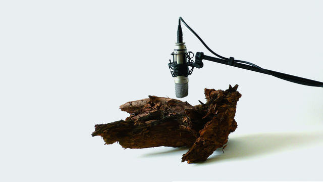 Zimoun, '25 woodworms, wood, microphone, sound system', 2009, bitforms gallery