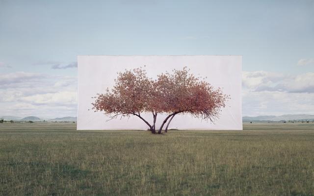 , 'Tree...#2,' 2011, Yossi Milo Gallery