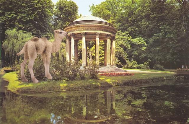 , 'Camel foal at Versailles,' 2013, Wilding Cran Gallery
