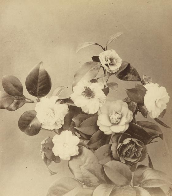 , 'fleurs photographiées,' ca. 1854, Galerie f5,6