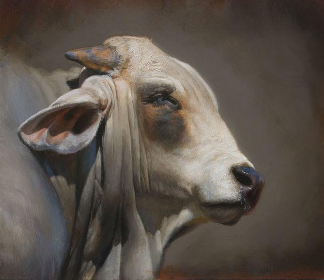 , 'Desert Brahman,' 2015, Abend Gallery