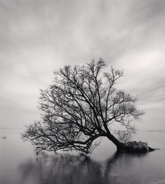 Michael Kenna, 'Falling Tree - Nagahama, Honshu, Japan.', 2002, Photography, Sepia toned silver gelatin print, Galeria de Babel