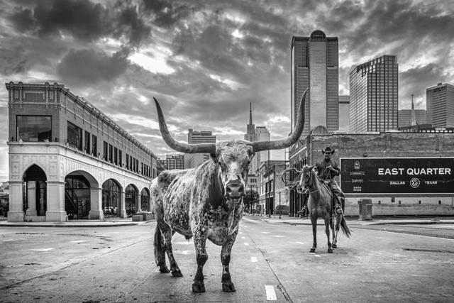 David Yarrow, 'A Dallas Cowboy', 2020, Photography, Archival Pigment Print, Hilton Asmus