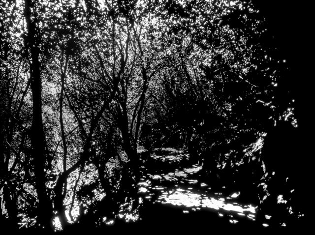 Soo-whan Choi, 'Emptiness_Woodland path', 2016, Gallery LEE & BAE