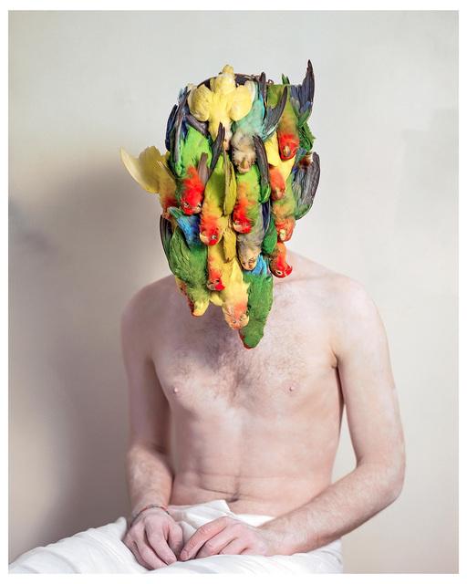 , 'Ablutio - Agapornis,' 2016, Luisa Catucci Gallery