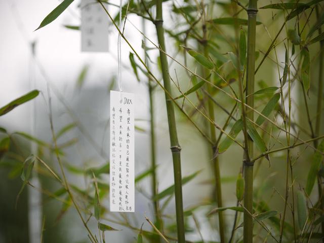 , ''Wish Tree Garden',' 2015, Faurschou Foundation