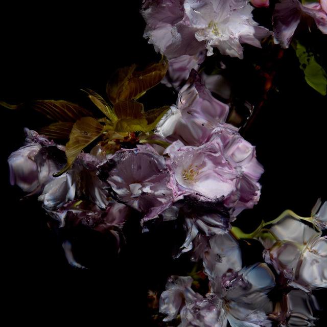 , 'Floral Study [0459],' 2012, Dellasposa