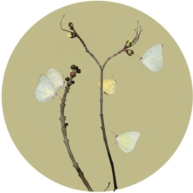 , 'Butterflies 2 Sulphur Butterfly ,' 2015, Purdy Hicks Gallery