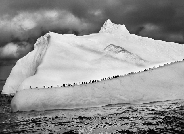 , 'CHINSTRAP PENGUINS ON AN ICEBERG BETWEEN ZAVODOVSKI AND VISOKOI ISLANDS, SOUTH SANDWICH ISLANDS,' 2009, Huxley-Parlour