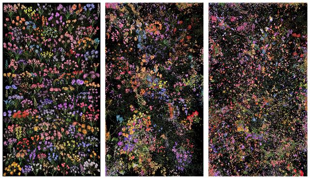 , 'Botanic, 4 (#2),' 2016, Jonathan Novak Contemporary Art