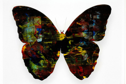 Stan Gaz, 'Butterfly 4', 2010, Mixed Media, Oil on C-print, ClampArt